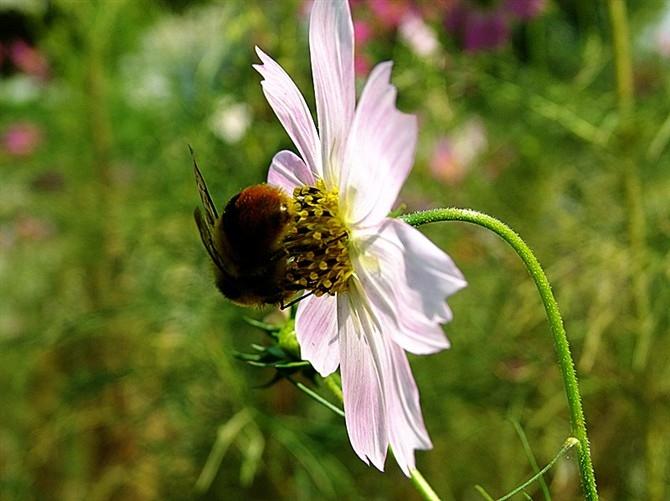 【竹林诗歌】珍藏在花草里的永恒