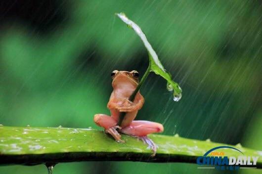 【正向】听雨(诗歌)