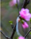 【西窗】不要辜负这个春天(组诗)
